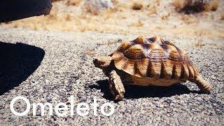Tortoise | Comedy Short Film | Omeleto