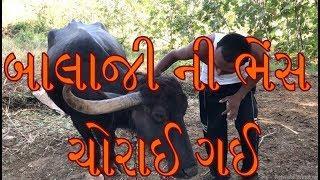 બાલાજી ની ભેંસ ચોરાઈ ગઈ || Best Gujarati Comedy Short Film 2019 || Amazing Wild Boys