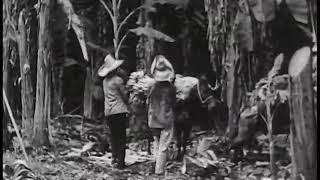 THIS FILM WENT BANANAS (1935 historical silent movie about bananas)