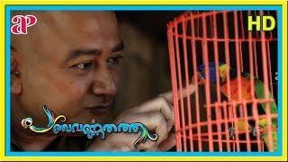 Kunchako Boban Comedy Movies   Panchavarnathatha Scenes   Jayaram talks about pets   Anusree