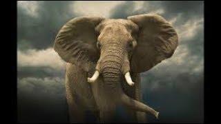 Au pays du million d'éléphants   Documentaire Intégral