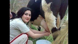 Most Punjabi's Funny Comedy Videos 2019 Latest || Best Punjabi Comedy || Funny Punjabi
