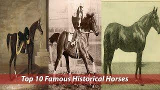 Top 10 Famous Historical Horses