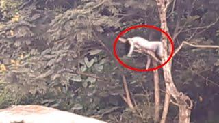Ghost On Tree   Scary Ghost Video Caught On Camera   Most Horror Video