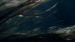 Siren Su parisi Fantasy film